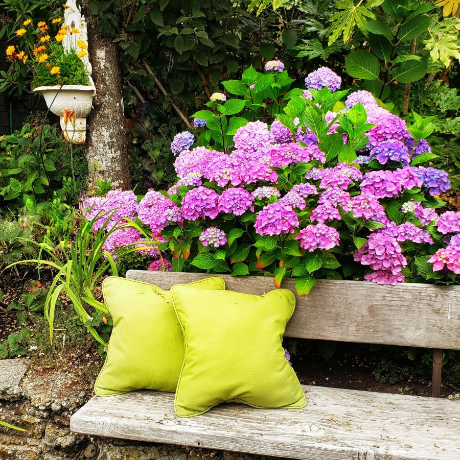 Colorful hydrangeas in front of a cozy bench