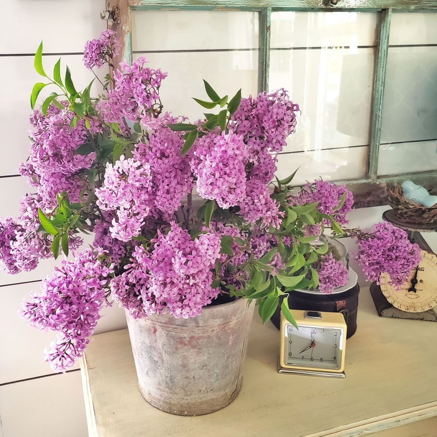 Vintage bucket full of spring lilac inspiration