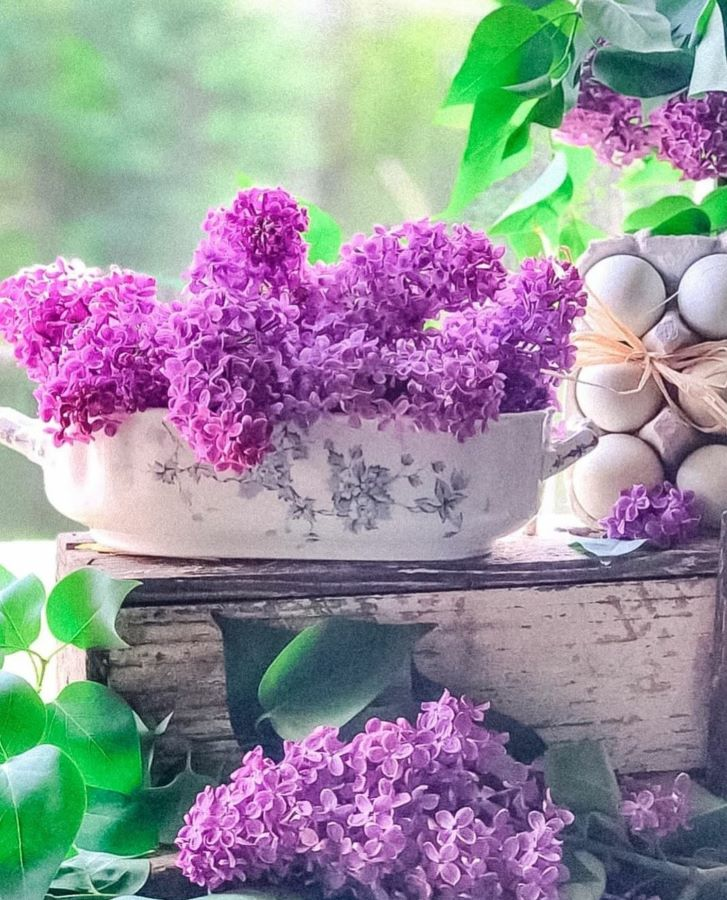 lilacs and eggs.
