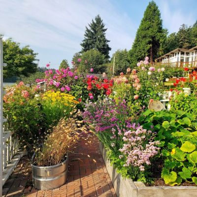 10 Flowers to Plant For a Low-Maintenance Garden