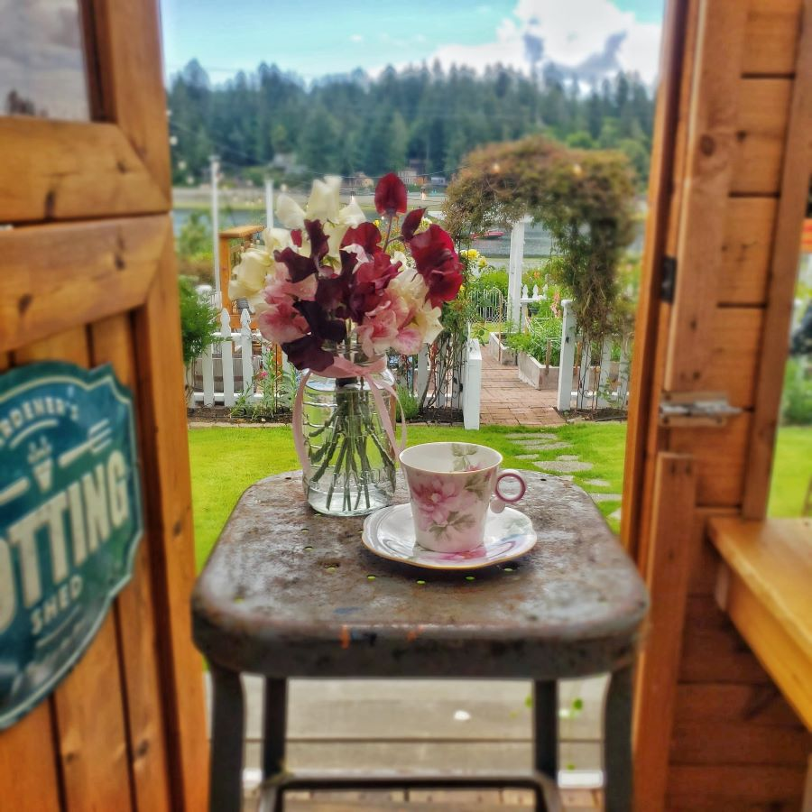 The rose traveling teacup on a stool in the greenhouse with a jar of sweet peas