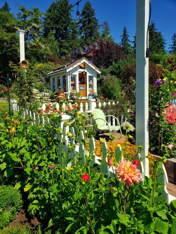 Greenhouse and white picket fence flower garden