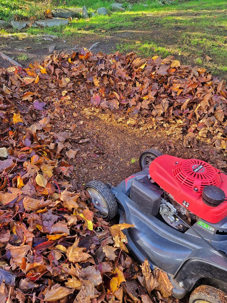 Mowing leaves into mulch