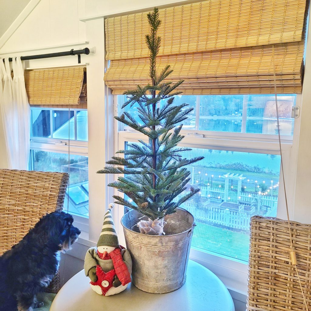 Christmas tree in window with black dog