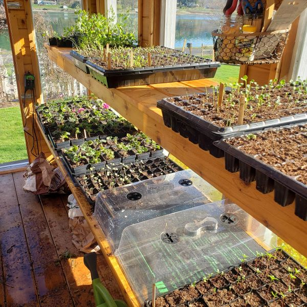 seed starts in a greenhouse