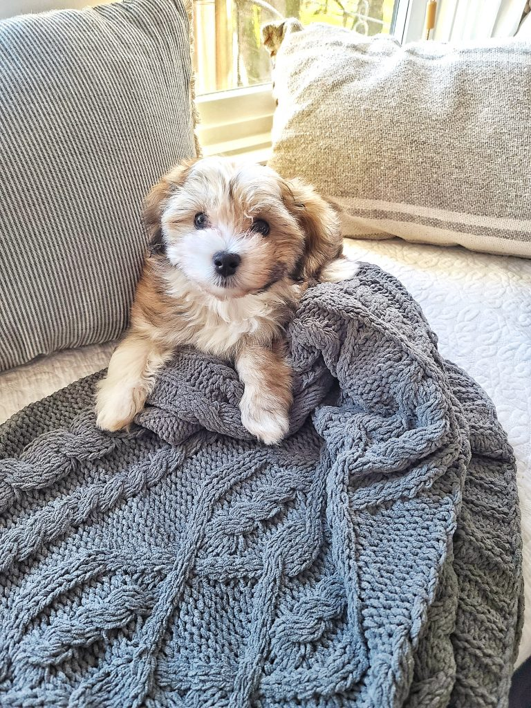 Puppy on a comfy winter throw