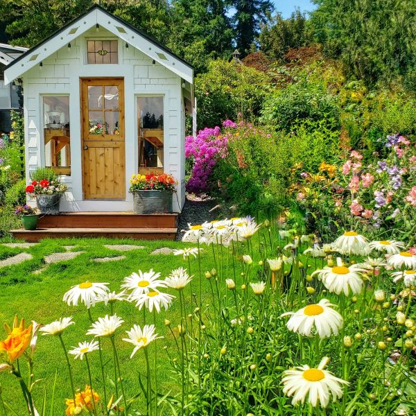 daisies and greenhouse in a cottage garden