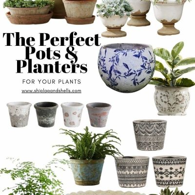 What's New:  Pots and Planters For This Season